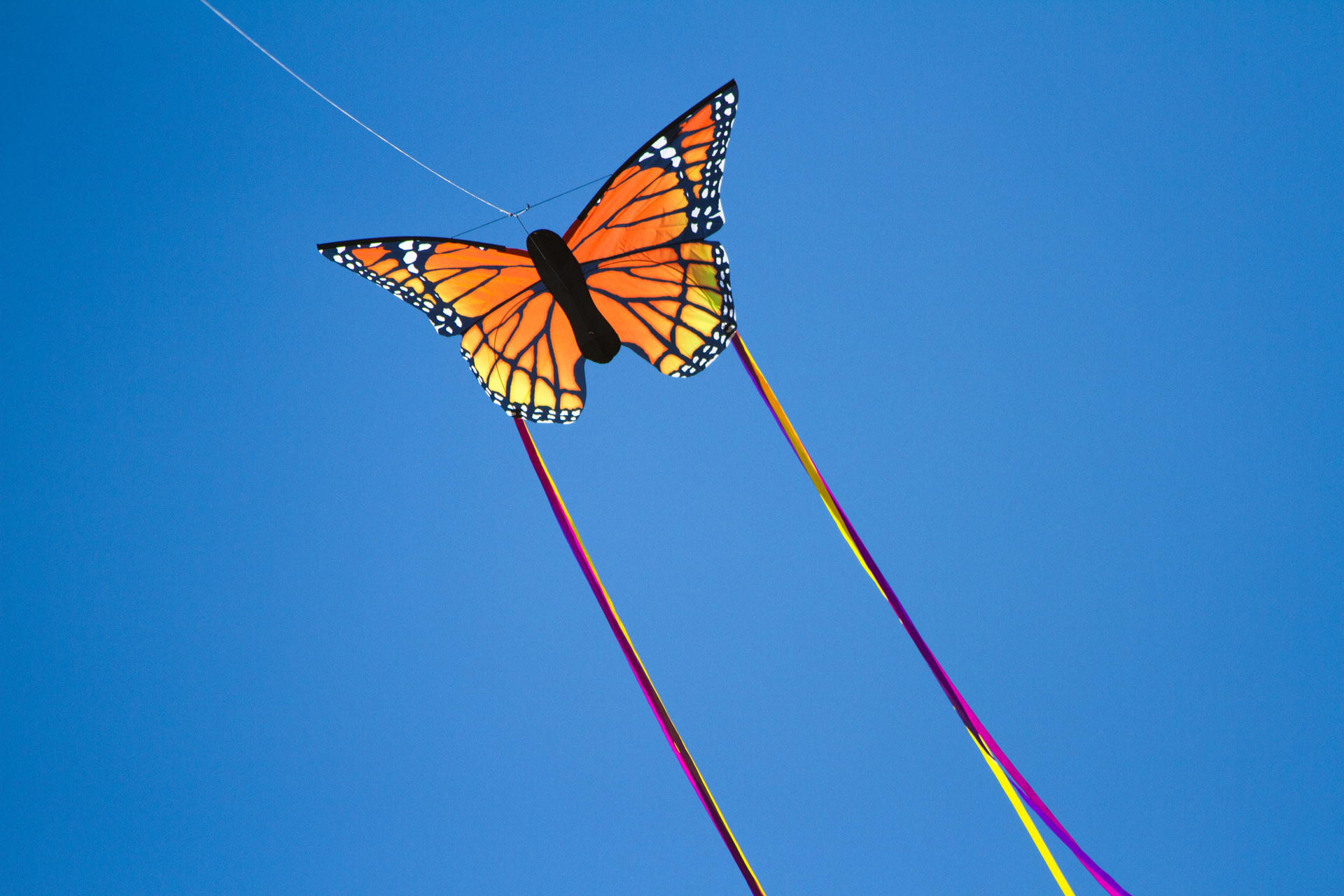 Lines Kite Color Fly Outdoor Toy Sport Fun Activity Flying Line 38